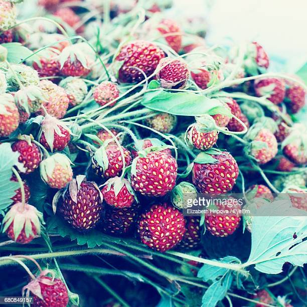 Close-Up Of Wild Strawberries For Sale At Market Stall