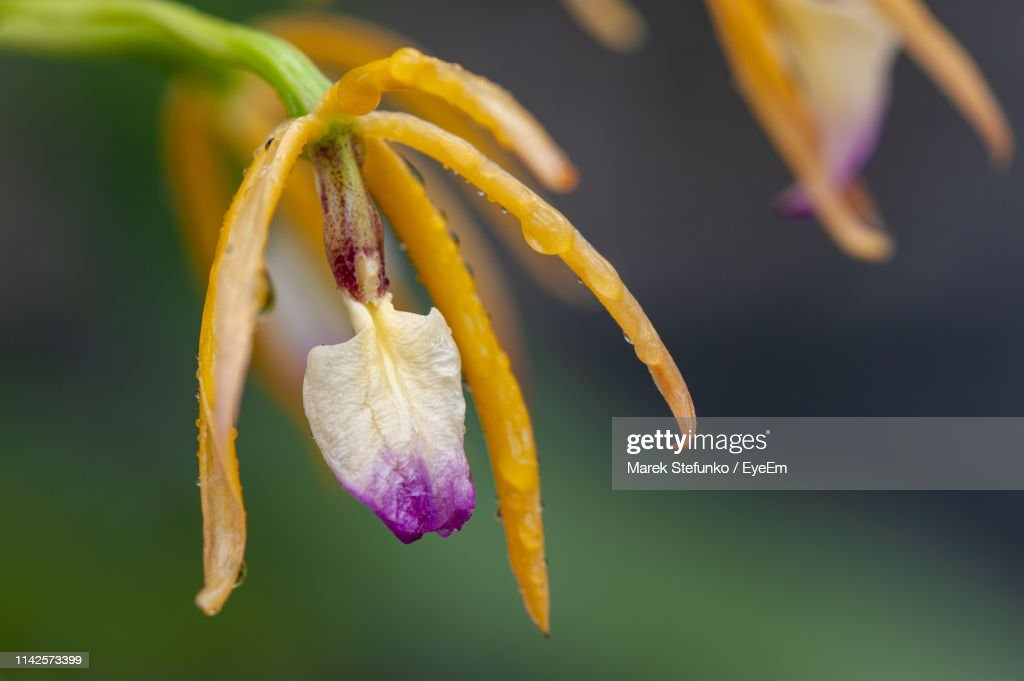 Close-Up Of Wilted Flower : Stock Photo