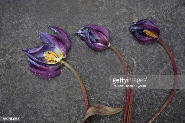 close-up of wilted flowers on ground - paulien tabak stock pictures, royalty-free photos & images