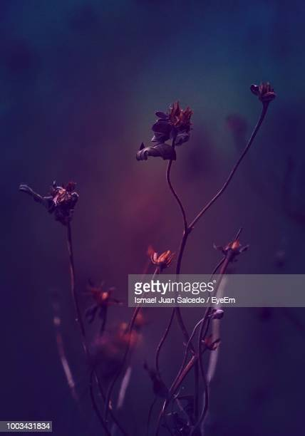 close-up of wilted flowers - wilted stock pictures, royalty-free photos & images