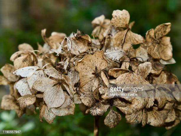 close-up of wilted plant - death stock pictures, royalty-free photos & images