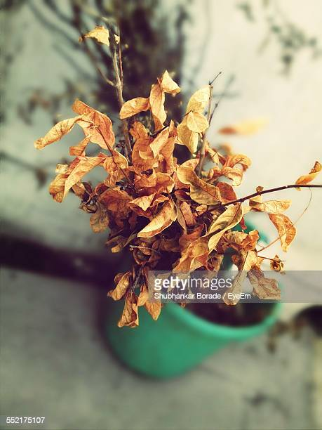 Close-Up Of Withered Potted Plant