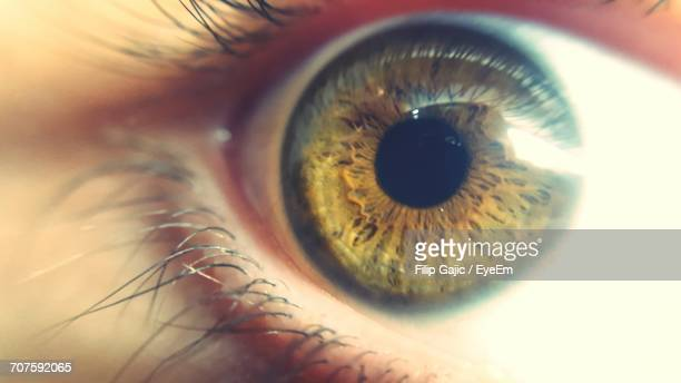 Close-Up Of Woman Brown Eye