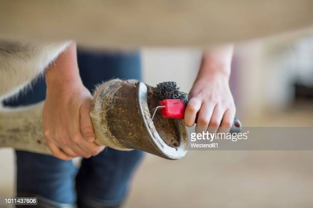 close-up of woman cleaning hoof of a horse - hufeisen stock-fotos und bilder