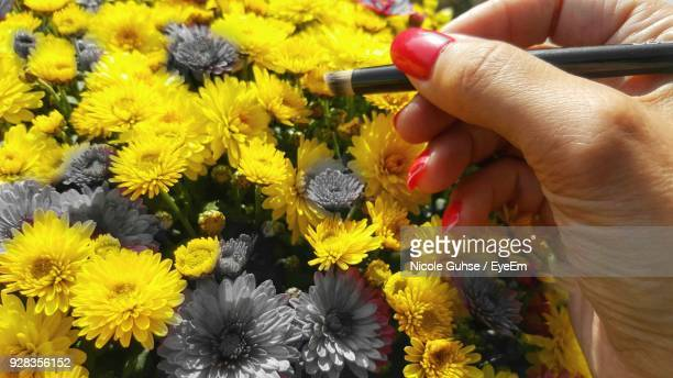 Close-Up Of Woman Coloring Yellow Flowers
