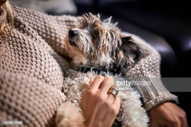 close-up of woman cuddling with lap dog at home - linda oliver fotografías e imágenes de stock