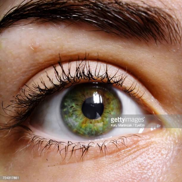 close-up of woman eye - green eyes stock pictures, royalty-free photos & images