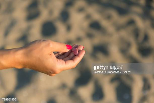 Close-Up Of Woman Hand Holding Shell On Beach