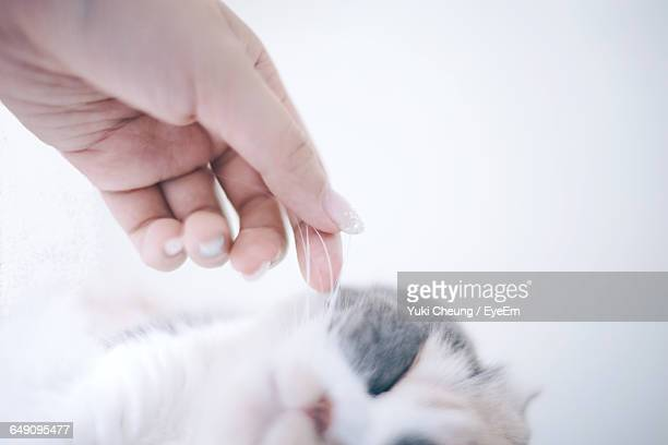 Close-Up Of Woman Hand Touching Cat Whisker