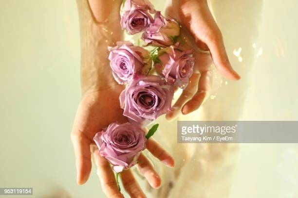 close-up of woman hands touching petals in water - kim rose stock-fotos und bilder