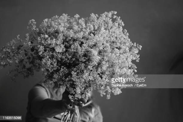 close-up of woman holding flowering plant on gray background - sabine kriesch stock-fotos und bilder