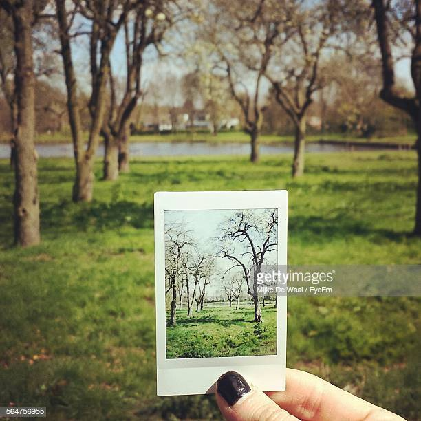 Close-Up Of Woman Holding Photograph Of Trees