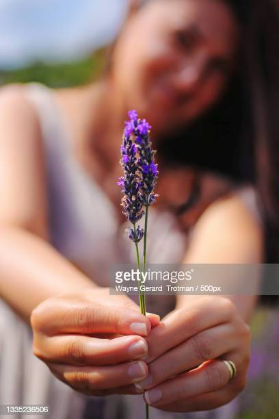 close-up of woman holding purple flower on field,surrey,united kingdom,uk - wayne gerard trotman stock pictures, royalty-free photos & images