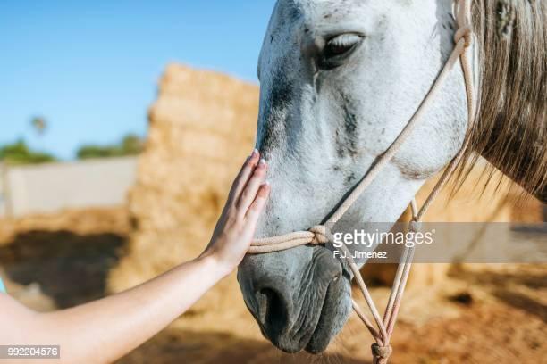 close-up of woman's hand caressing a horse - 1 woman 1 horse fotografías e imágenes de stock