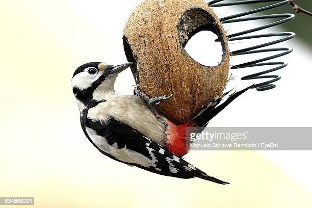 Close-Up Of Woodpecker On Feeder