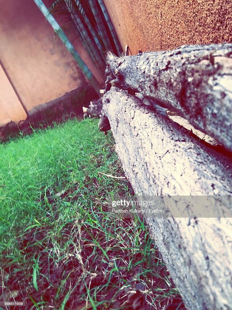 Close-Up Of Woods On Grassy Field Against Wall : Stock Photo