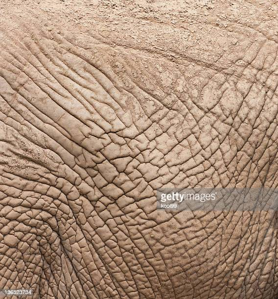 Close-up of wrinkly and dirty elephant skin