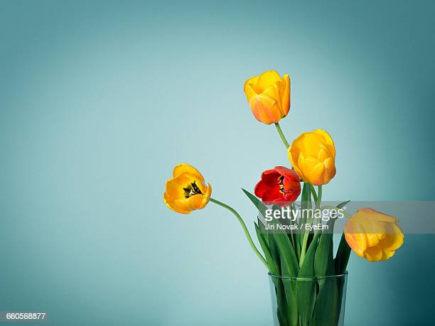 Close-Up Of Yellow And Red Tulips In Vase Against Colored Background