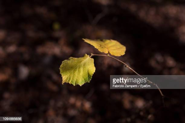 close-up of yellow dry leaf on land - fabrizio zampetti foto e immagini stock