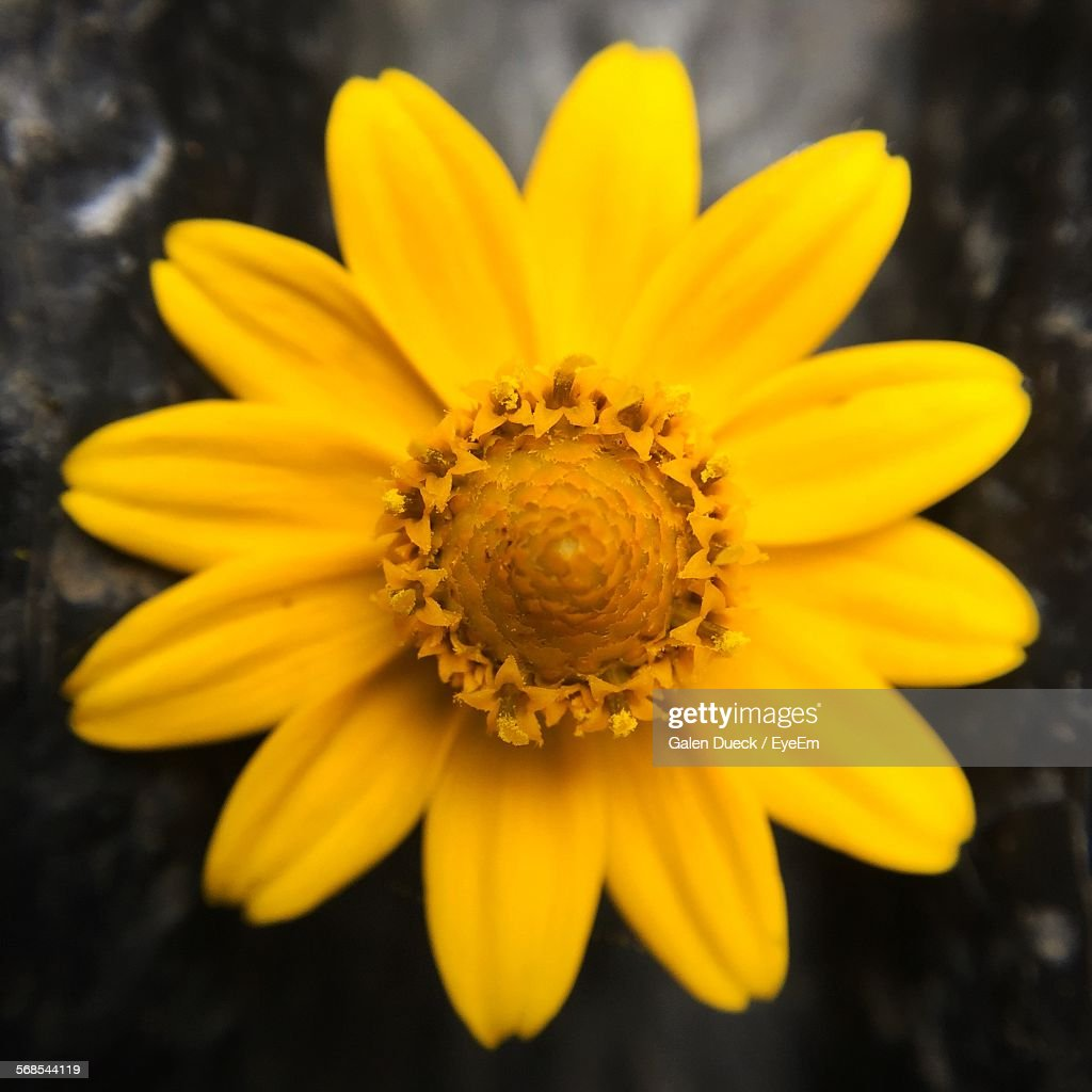 Close-Up Of Yellow Flower Blooming In Yard : Stock Photo