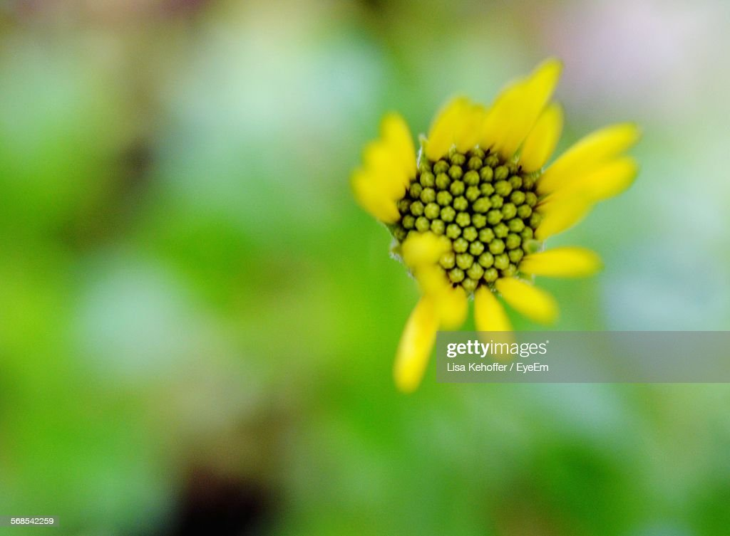 Close-Up Of Yellow Flower Blooming Outdoors : Stock-Foto