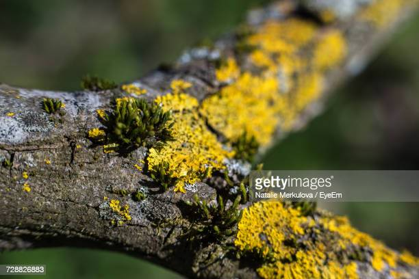 Close-Up Of Yellow Flower Growing On Tree Trunk