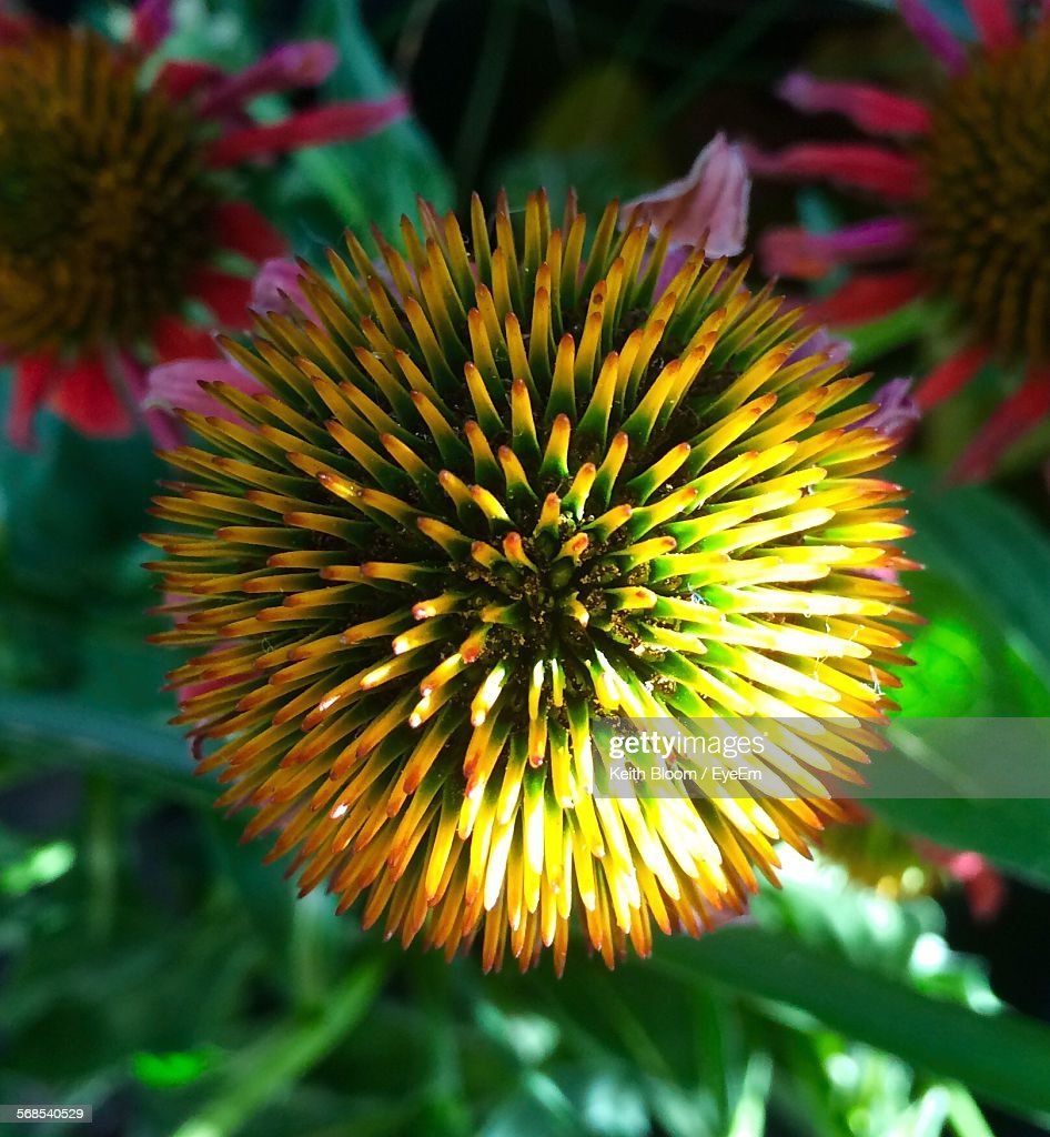 Close-Up Of Yellow Flower Growing Outdoors : Stock Photo