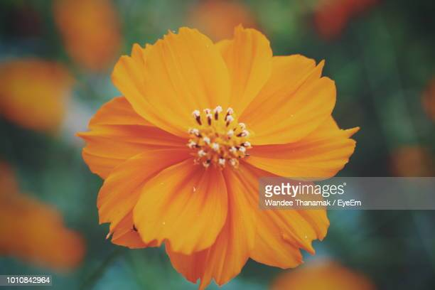 close-up of yellow flower - stamen stock pictures, royalty-free photos & images