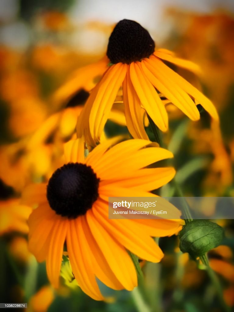 Close-Up Of Yellow Flower : Stock Photo