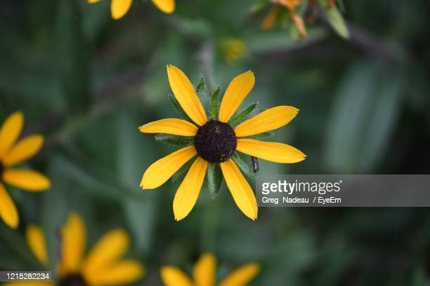 close-up of yellow flower - greg nadeau stock pictures, royalty-free photos & images