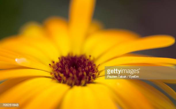 close-up of yellow flower - paulien tabak stock-fotos und bilder