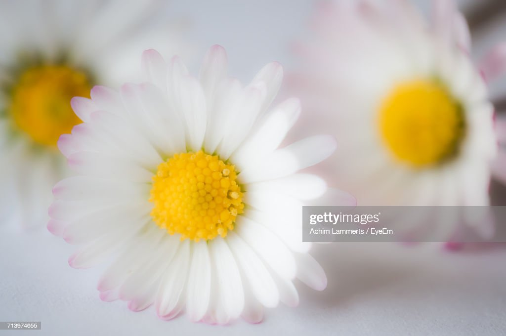 Close-Up Of Yellow Flower : Stock-Foto