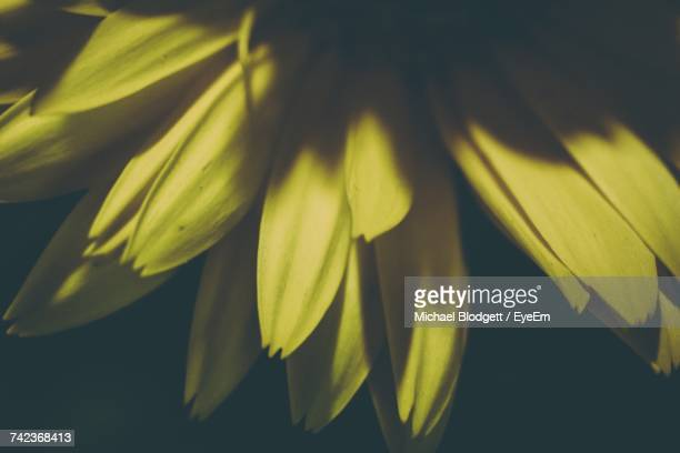 close-up of yellow flower - michael blodgett stock pictures, royalty-free photos & images
