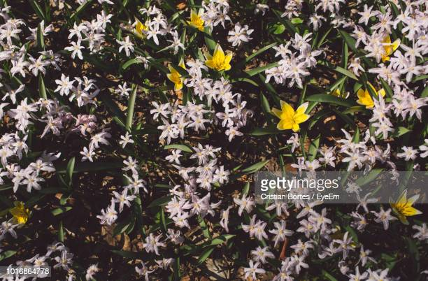 close-up of yellow flowering plant leaves - bortes ストックフォトと画像