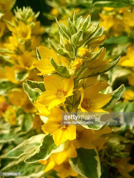 close-up of yellow flowering plant - eyeem stock pictures, royalty-free photos & images