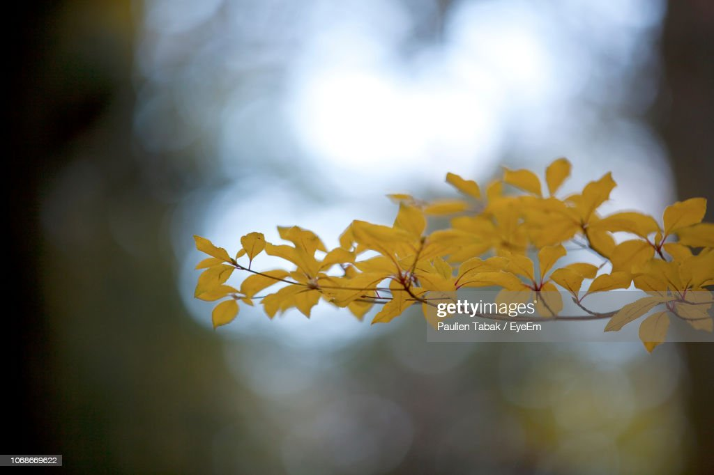 Close-Up Of Yellow Flowering Plant : Stockfoto
