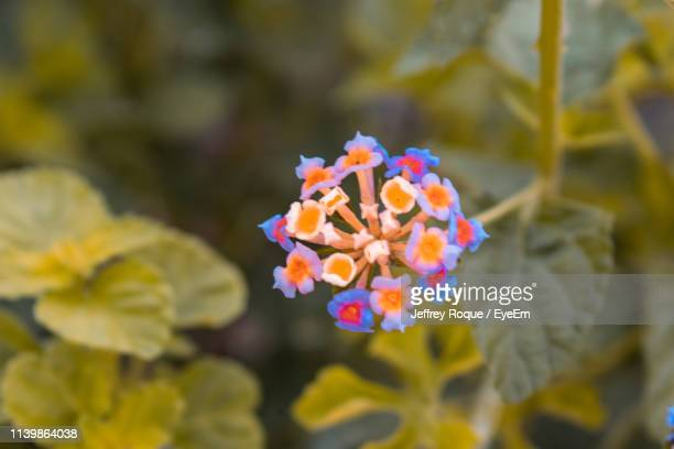 close-up of yellow flowering plant - jeffrey roque stock photos and pictures