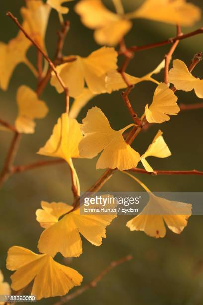 close-up of yellow flowering plant - emma hunter eye em stock photos and pictures