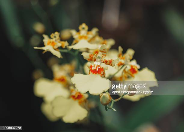 close-up of yellow flowering plant - apisit hiranpornpan stock pictures, royalty-free photos & images