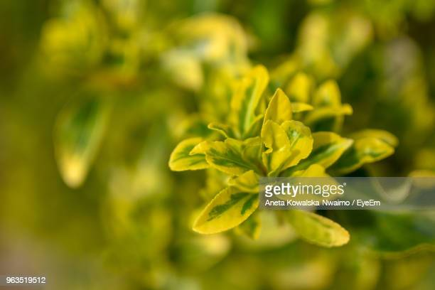 close-up of yellow flowering plant - aneta eyeem stock pictures, royalty-free photos & images
