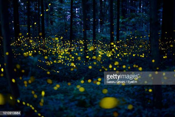close-up of yellow flowering plants by trees in forest - fireflies stock pictures, royalty-free photos & images
