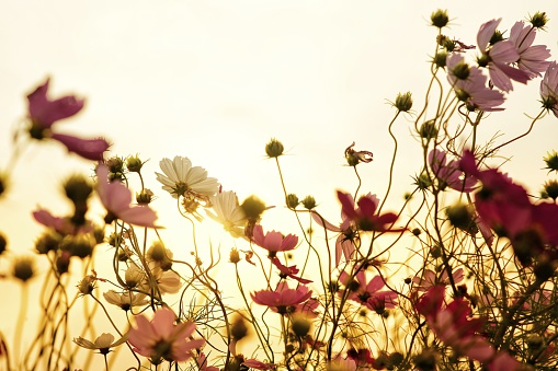 Close-Up Of Yellow Flowering Plants On Field Against Sky - gettyimageskorea