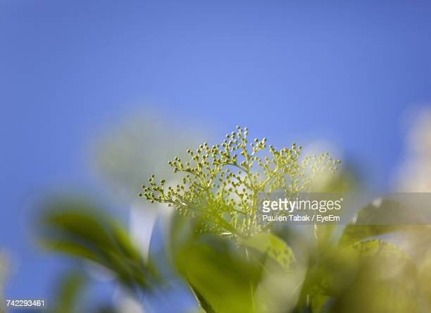 close-up of yellow flowers against clear sky - paulien tabak stock-fotos und bilder