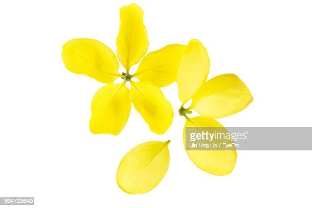 Yellow flower stock photos and pictures getty images close up of yellow flowers against white background mightylinksfo