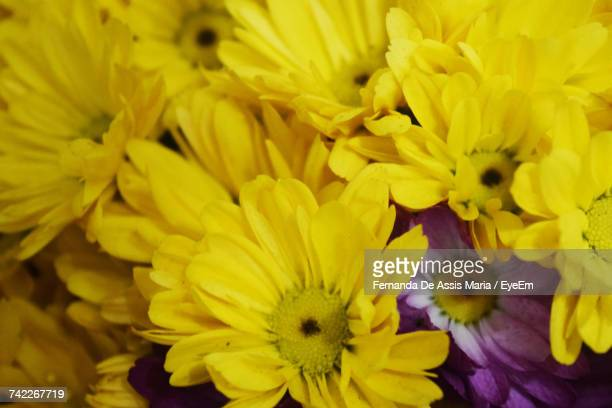 close-up of yellow flowers blooming outdoors - assis ストックフォトと画像