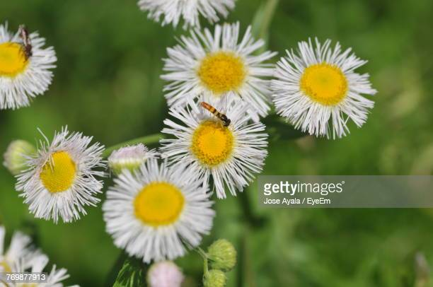 close-up of yellow flowers blooming outdoors - jose ayala stock pictures, royalty-free photos & images