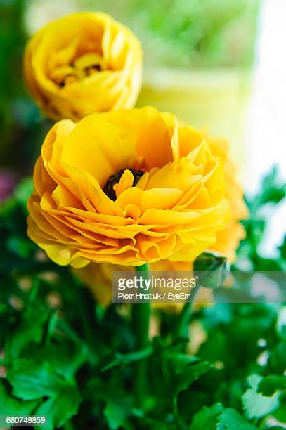 close-up of yellow flowers blooming - piotr hnatiuk imagens e fotografias de stock