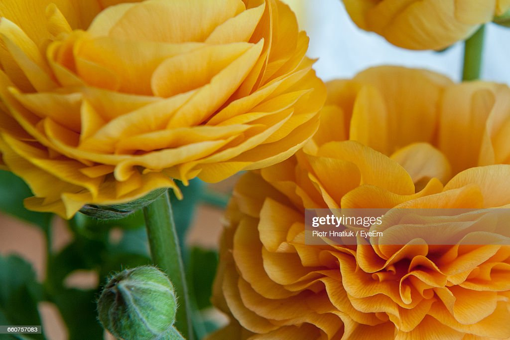 Close-Up Of Yellow Flowers Blooming : Stock Photo