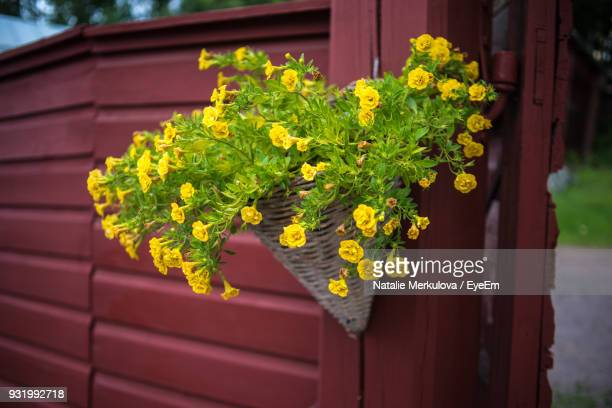 Close-Up Of Yellow Flowers Growing On Fence