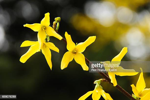 close-up of yellow flowers growing outdoors - piotr hnatiuk foto e immagini stock